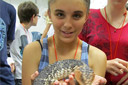 Reptile workshop