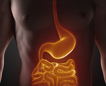 Having good gut health can reduce chances of obesity, non-alcoholic liver disease and certain types of cancer.